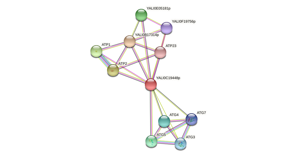 XP_502014.1 protein (Yarrowia lipolytica) - STRING interaction network