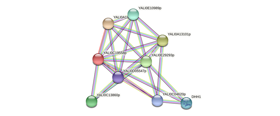 XP_502015.2 protein (Yarrowia lipolytica) - STRING interaction network