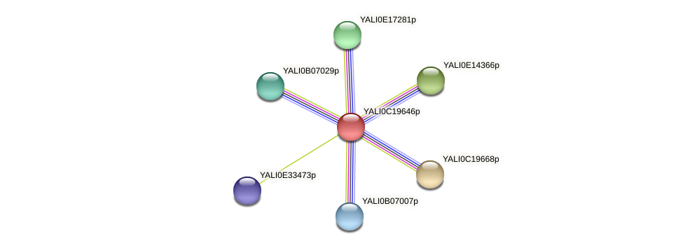 XP_502019.1 protein (Yarrowia lipolytica) - STRING interaction network