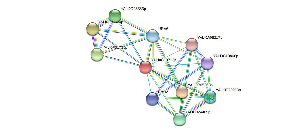 XP_502023.1 protein (Yarrowia lipolytica) - STRING interaction network