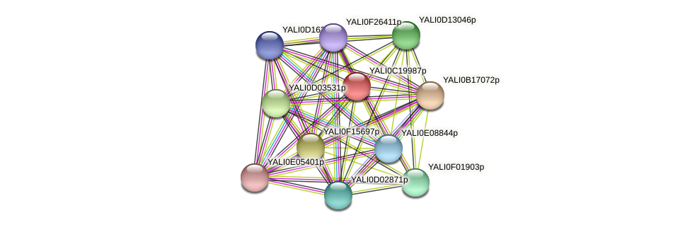 XP_502035.1 protein (Yarrowia lipolytica) - STRING interaction network