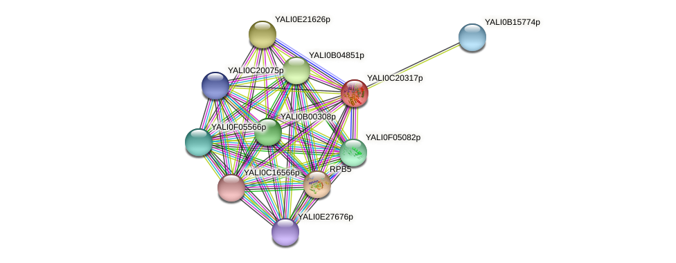 XP_502047.1 protein (Yarrowia lipolytica) - STRING interaction network