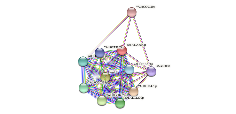 XP_502070.1 protein (Yarrowia lipolytica) - STRING interaction network