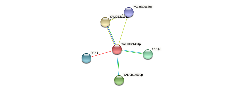 XP_502094.1 protein (Yarrowia lipolytica) - STRING interaction network