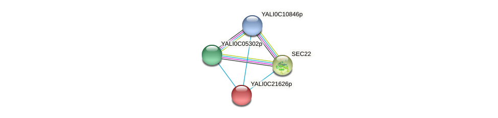 XP_502100.1 protein (Yarrowia lipolytica) - STRING interaction network