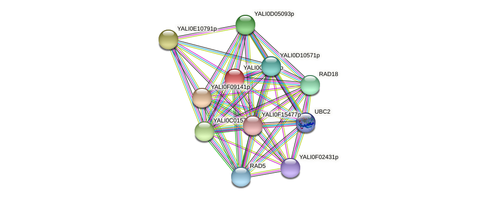XP_502101.1 protein (Yarrowia lipolytica) - STRING interaction network