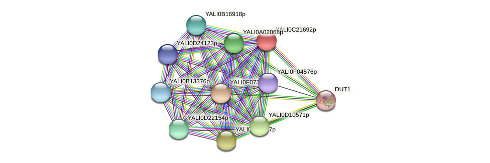 XP_502103.1 protein (Yarrowia lipolytica) - STRING interaction network