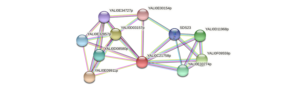 XP_502105.1 protein (Yarrowia lipolytica) - STRING interaction network