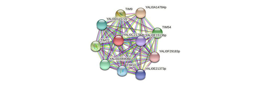 XP_502106.1 protein (Yarrowia lipolytica) - STRING interaction network