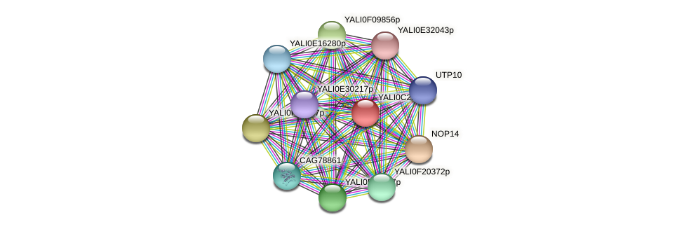 XP_502109.1 protein (Yarrowia lipolytica) - STRING interaction network