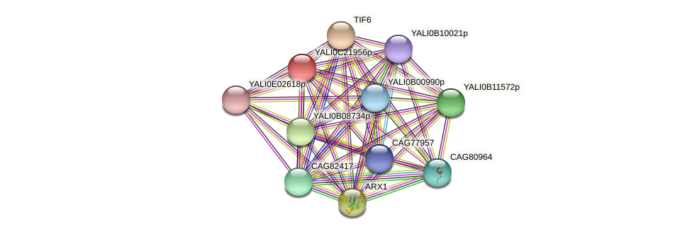 XP_502114.1 protein (Yarrowia lipolytica) - STRING interaction network