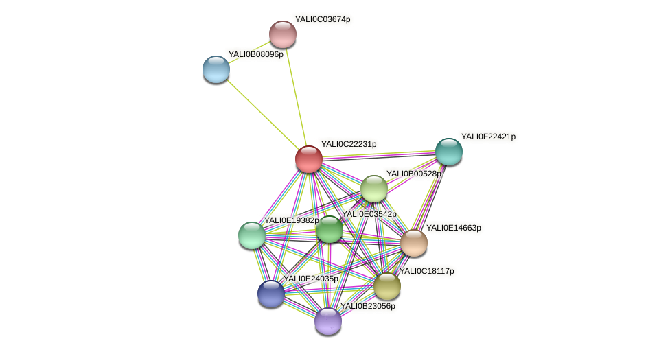 XP_502127.1 protein (Yarrowia lipolytica) - STRING interaction network