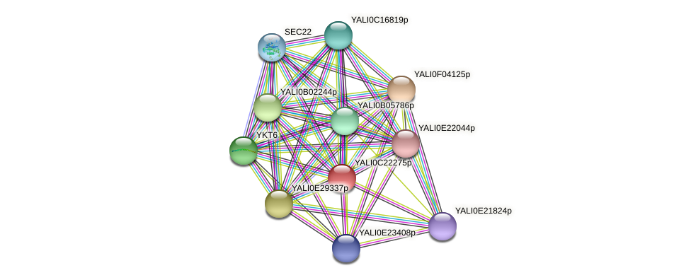 XP_502129.2 protein (Yarrowia lipolytica) - STRING interaction network