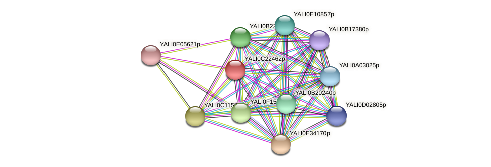 XP_502138.1 protein (Yarrowia lipolytica) - STRING interaction network