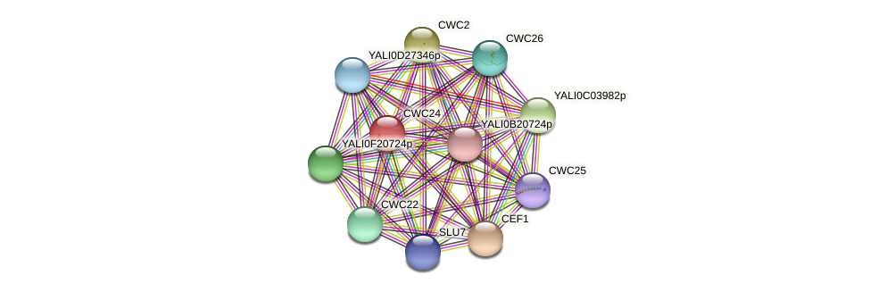 CWC24 protein (Yarrowia lipolytica) - STRING interaction network