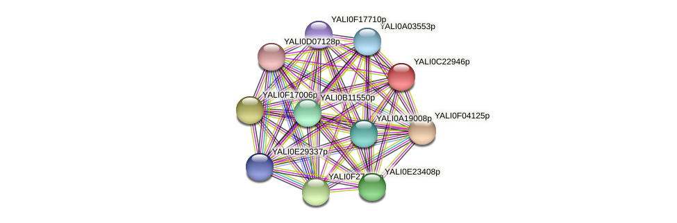 XP_502159.2 protein (Yarrowia lipolytica) - STRING interaction network