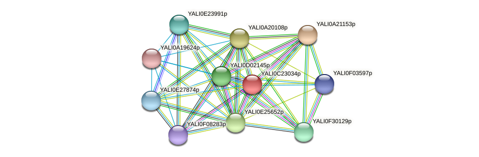 XP_502162.1 protein (Yarrowia lipolytica) - STRING interaction network
