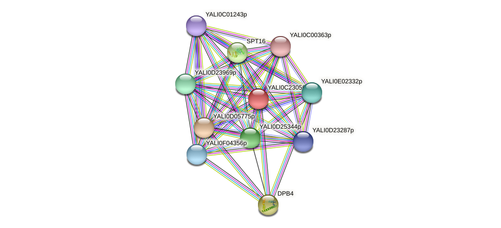 XP_502163.2 protein (Yarrowia lipolytica) - STRING interaction network