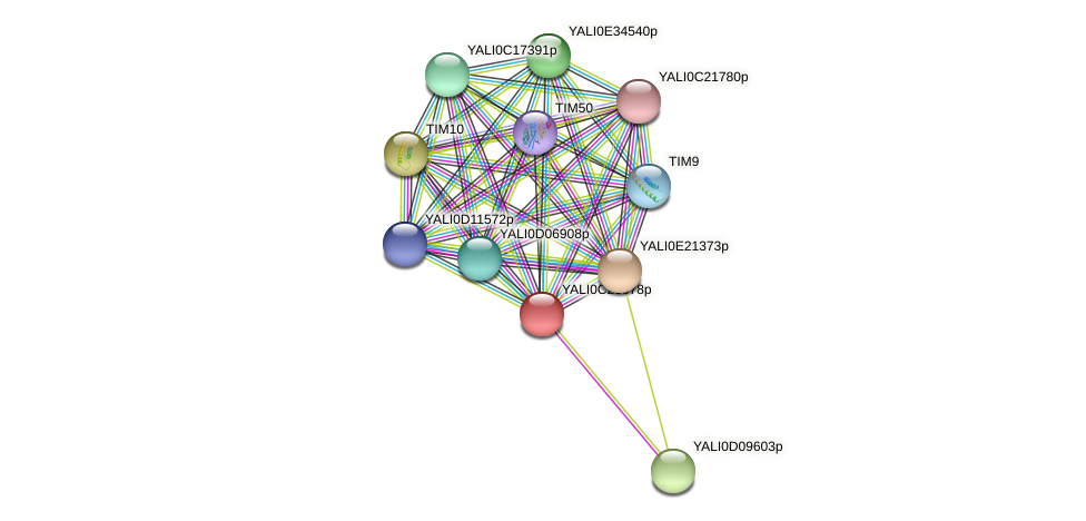 XP_502164.1 protein (Yarrowia lipolytica) - STRING interaction network