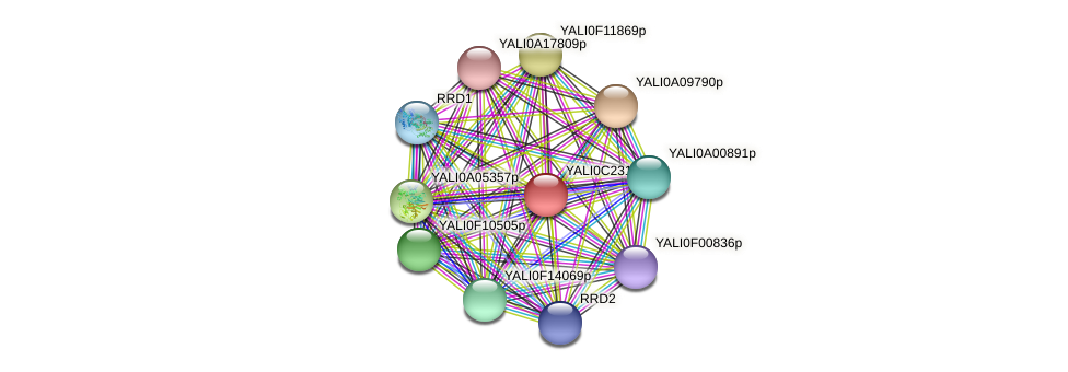 XP_502165.1 protein (Yarrowia lipolytica) - STRING interaction network