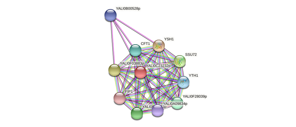 XP_502172.1 protein (Yarrowia lipolytica) - STRING interaction network