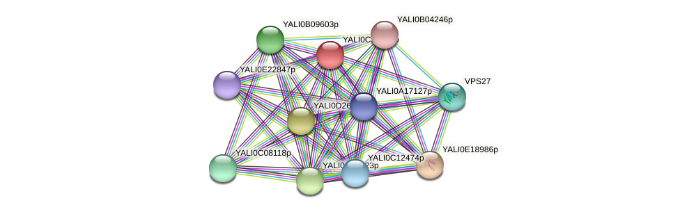 XP_502201.1 protein (Yarrowia lipolytica) - STRING interaction network