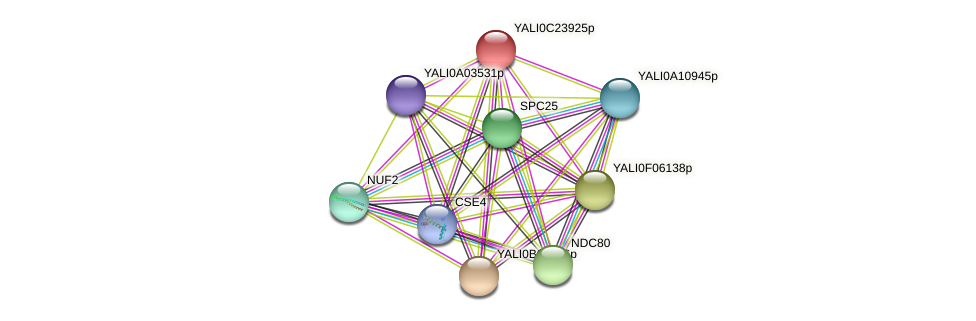 XP_502202.2 protein (Yarrowia lipolytica) - STRING interaction network