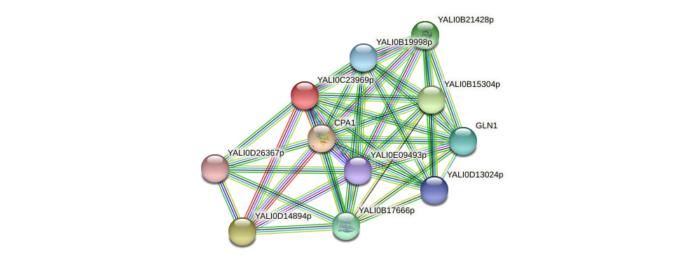 XP_502204.1 protein (Yarrowia lipolytica) - STRING interaction network