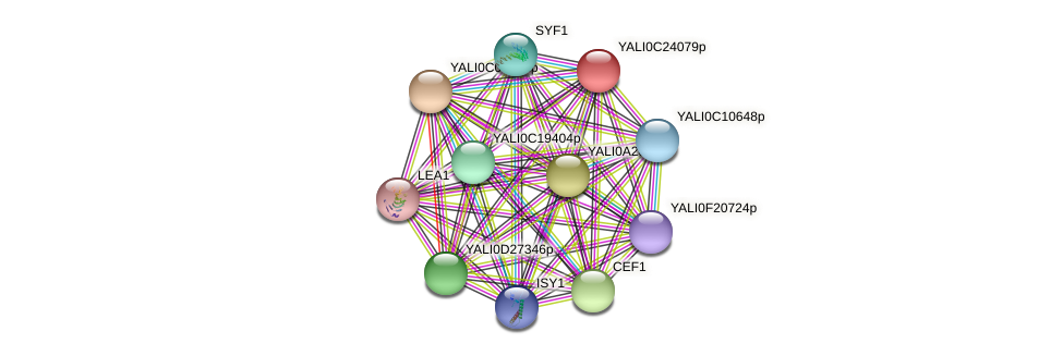 XP_502209.2 protein (Yarrowia lipolytica) - STRING interaction network