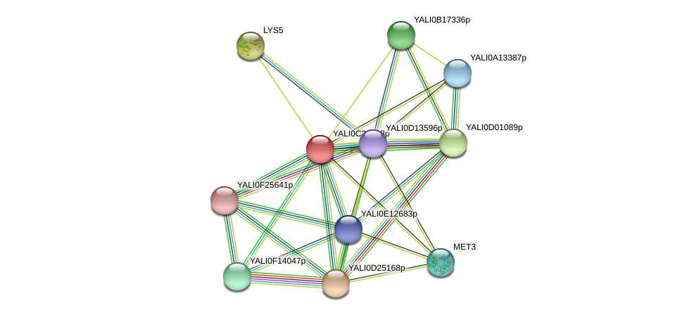 XP_502216.1 protein (Yarrowia lipolytica) - STRING interaction network