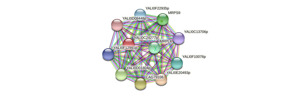 XP_502218.1 protein (Yarrowia lipolytica) - STRING interaction network