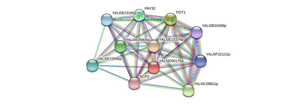 XP_502229.1 protein (Yarrowia lipolytica) - STRING interaction network