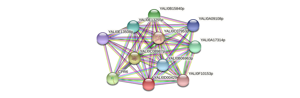 XP_502241.1 protein (Yarrowia lipolytica) - STRING interaction network