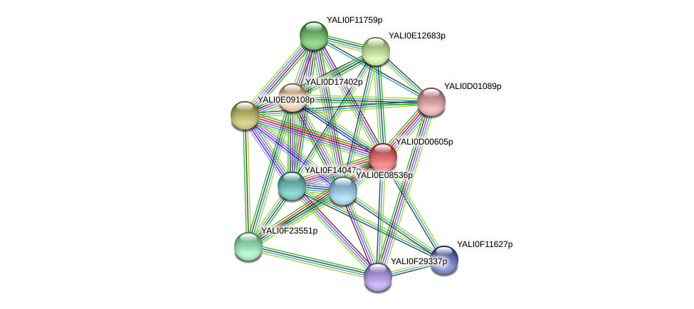 XP_502248.1 protein (Yarrowia lipolytica) - STRING interaction network
