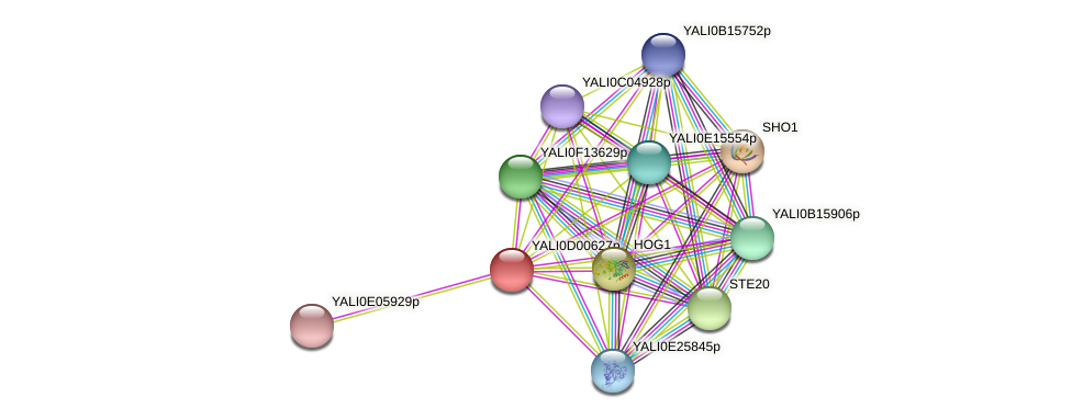 XP_502249.1 protein (Yarrowia lipolytica) - STRING interaction network