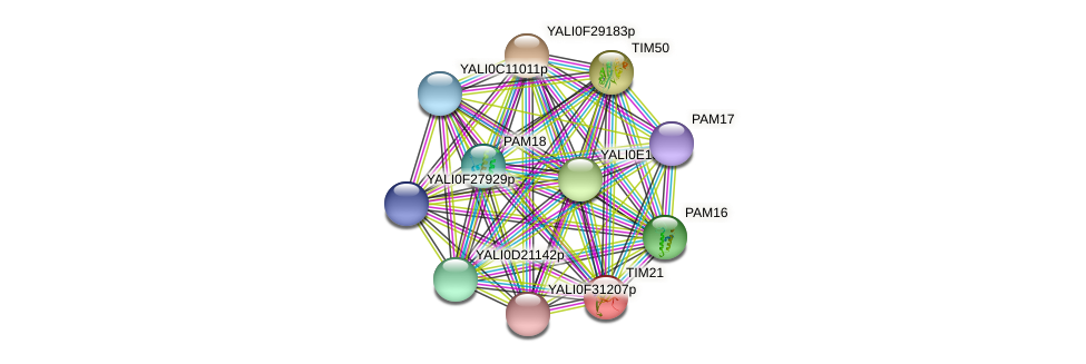 TIM21 protein (Yarrowia lipolytica) - STRING interaction network