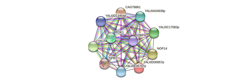 XP_502264.1 protein (Yarrowia lipolytica) - STRING interaction network