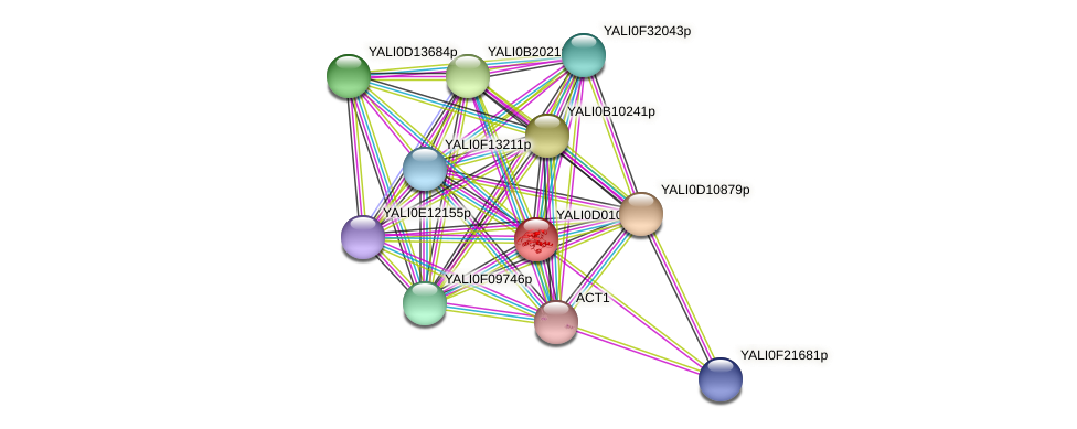 XP_502268.1 protein (Yarrowia lipolytica) - STRING interaction network