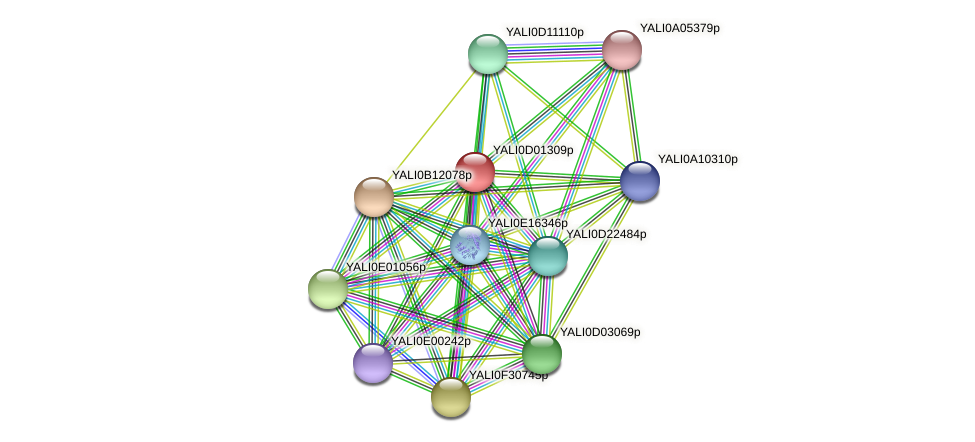 XP_502280.1 protein (Yarrowia lipolytica) - STRING interaction network
