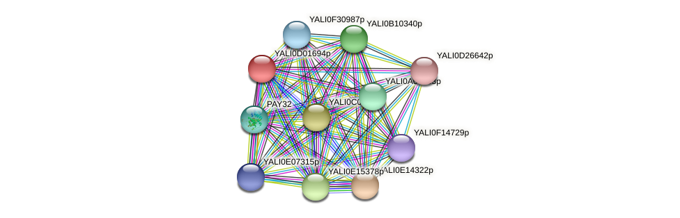 XP_502296.1 protein (Yarrowia lipolytica) - STRING interaction network