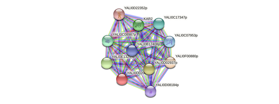 XP_502307.1 protein (Yarrowia lipolytica) - STRING interaction network