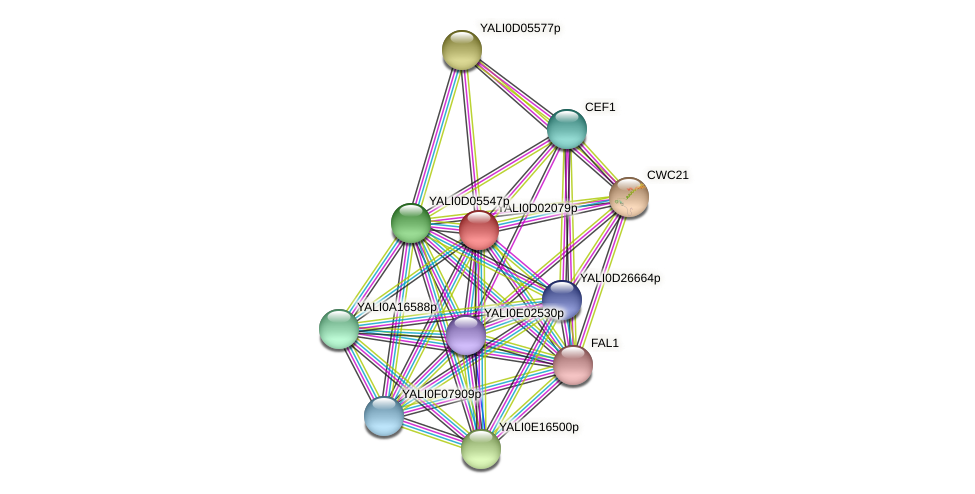 XP_502311.1 protein (Yarrowia lipolytica) - STRING interaction network
