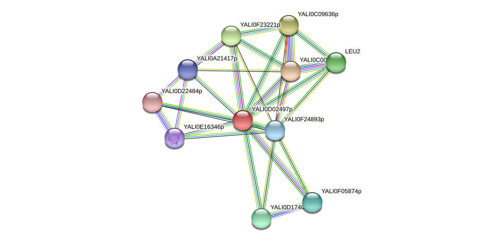 XP_502328.1 protein (Yarrowia lipolytica) - STRING interaction network