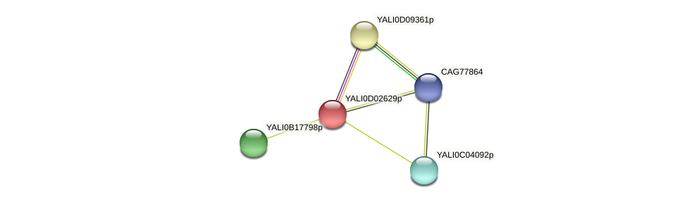 XP_502333.1 protein (Yarrowia lipolytica) - STRING interaction network