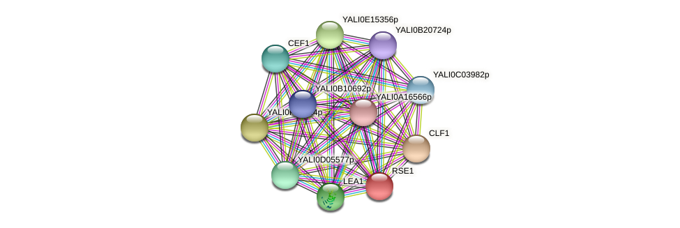 RSE1 protein (Yarrowia lipolytica) - STRING interaction network