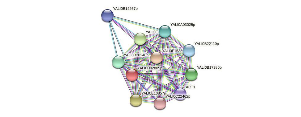XP_502341.2 protein (Yarrowia lipolytica) - STRING interaction network