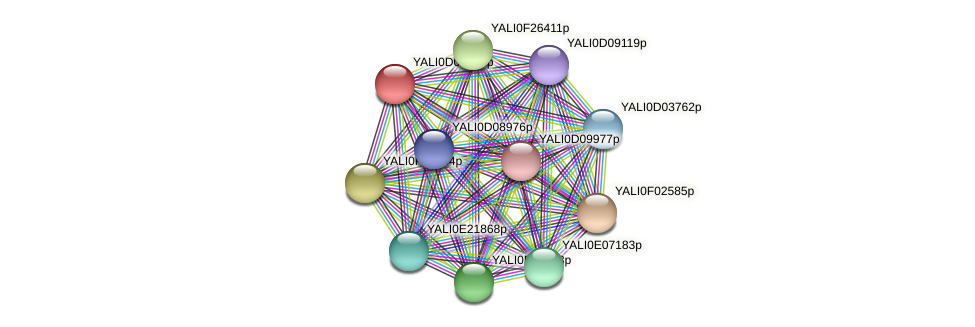 XP_502344.1 protein (Yarrowia lipolytica) - STRING interaction network