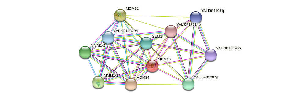 MDM10 protein (Yarrowia lipolytica) - STRING interaction network