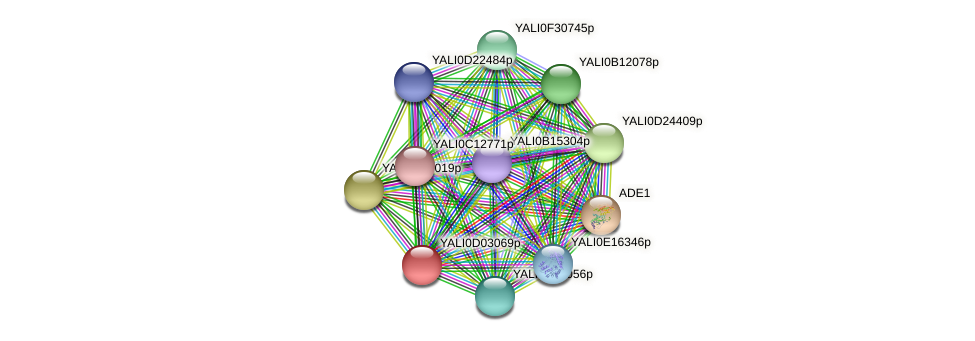 XP_502351.1 protein (Yarrowia lipolytica) - STRING interaction network