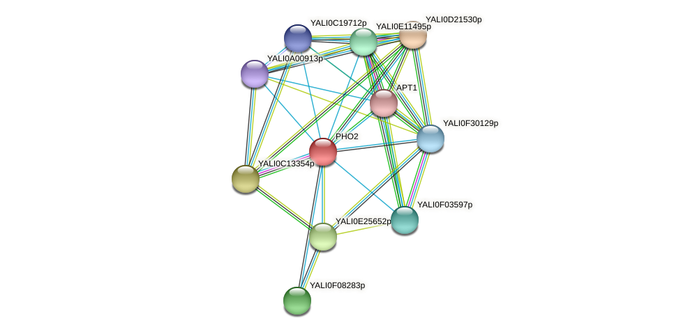 PHO2 protein (Yarrowia lipolytica) - STRING interaction network